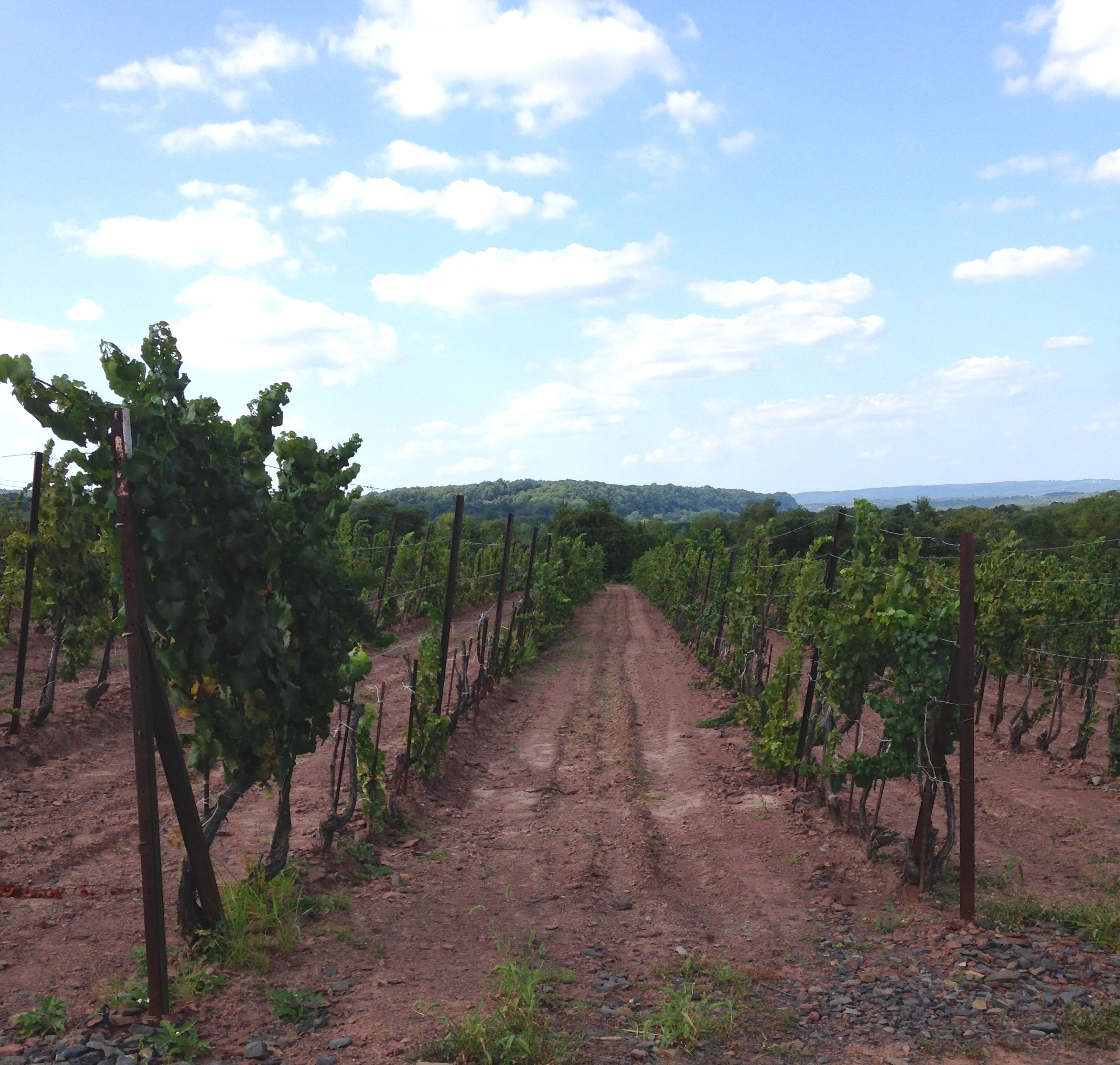 Sand Castle Winery grows 4 kinds of grapes