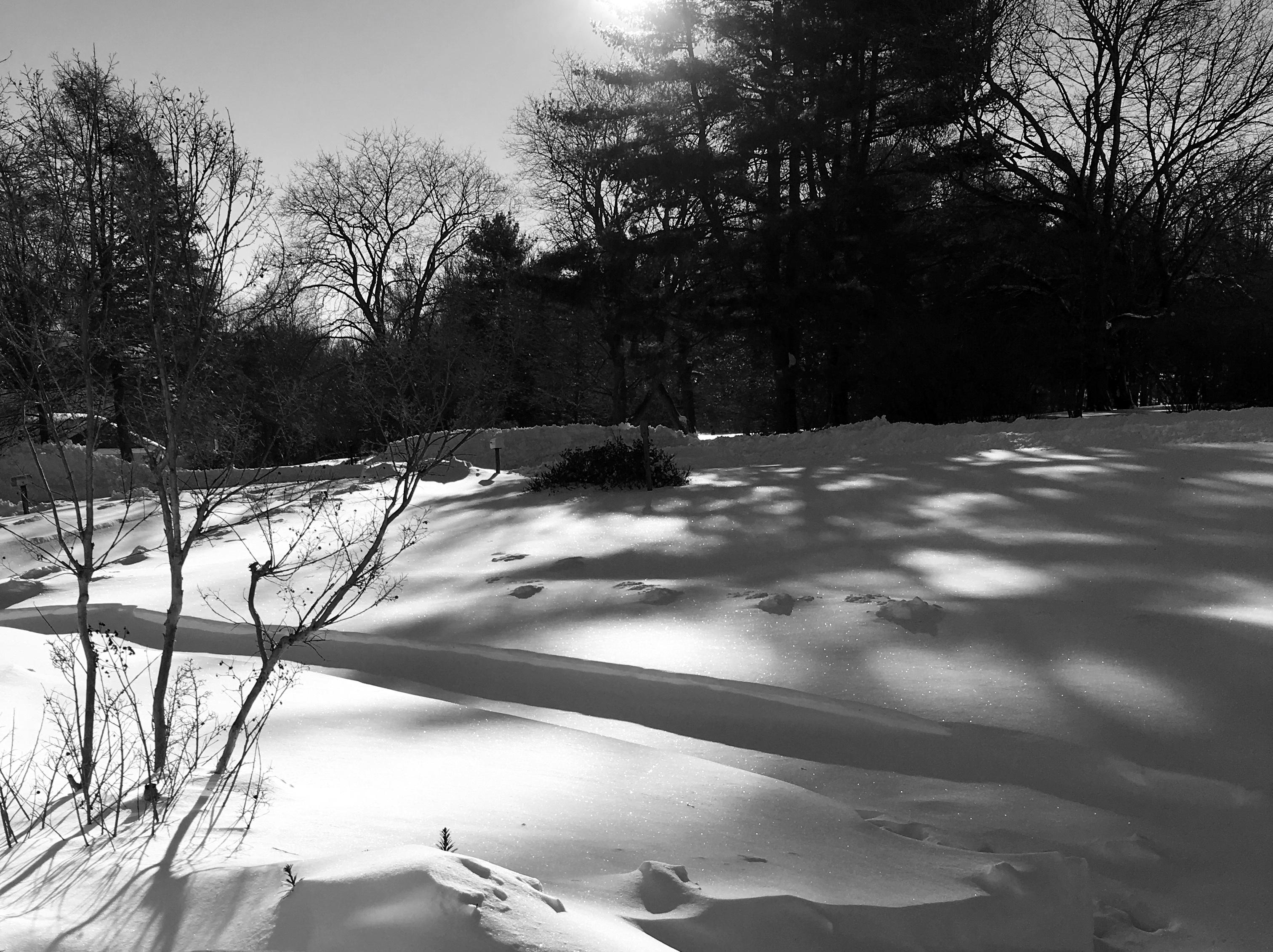 morning snow shadows