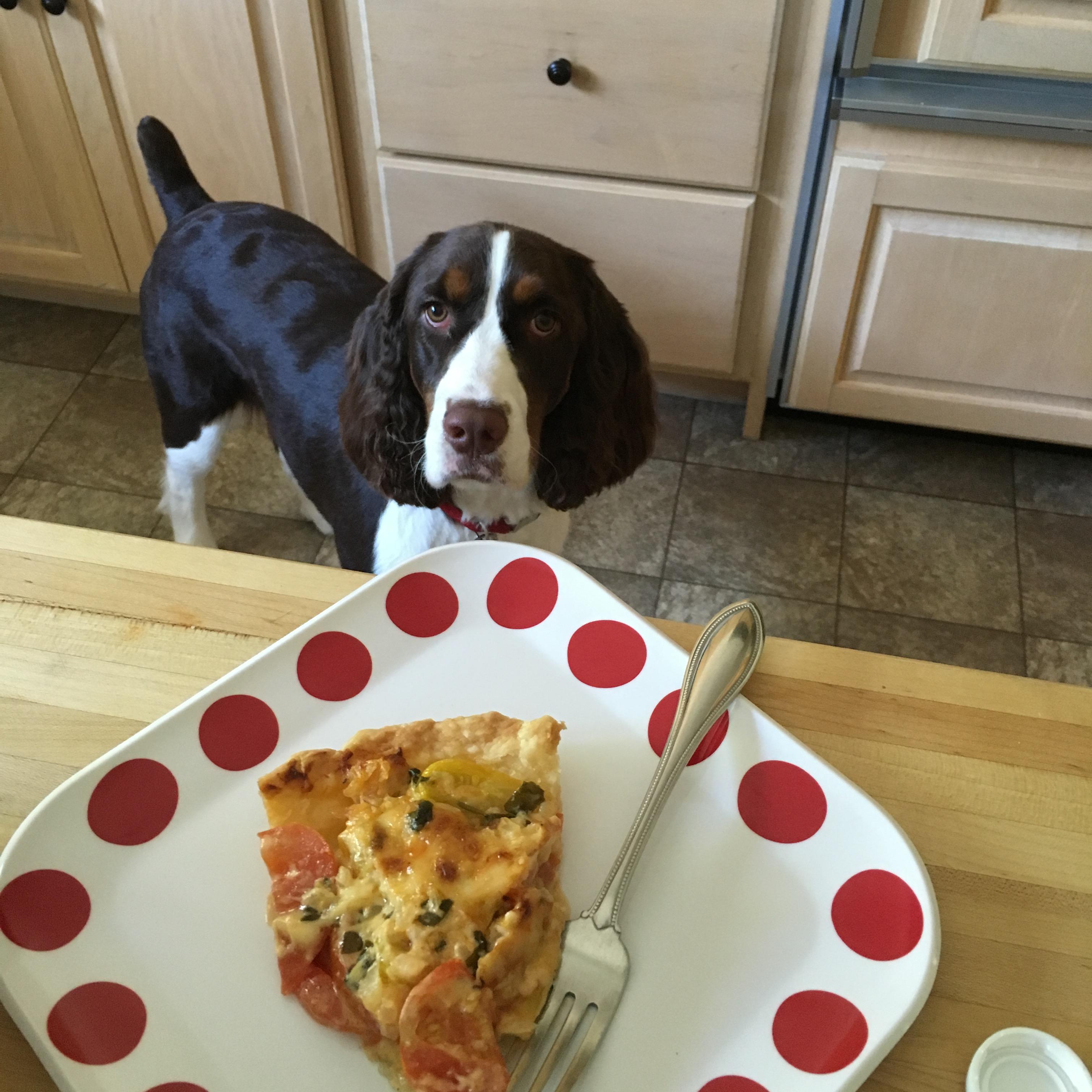 slice of tomato pie and dog
