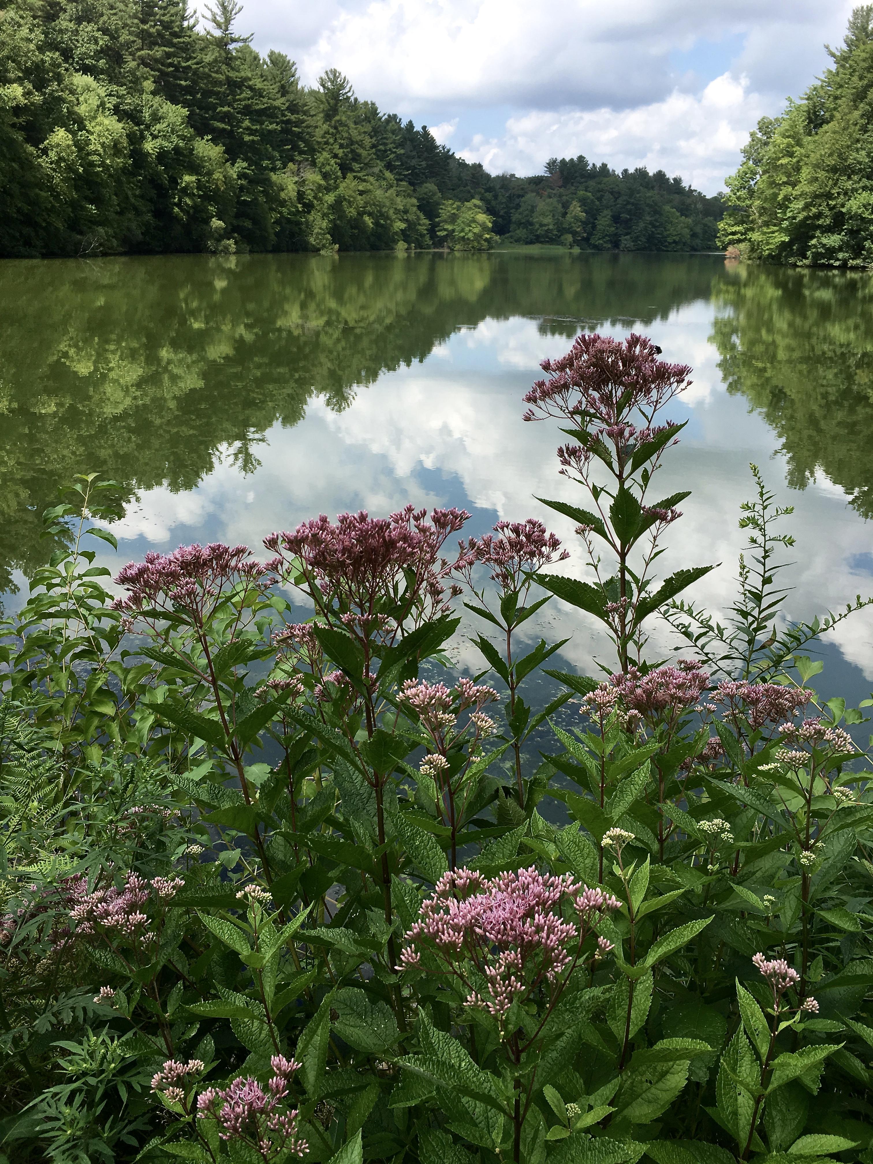 flora at the lake