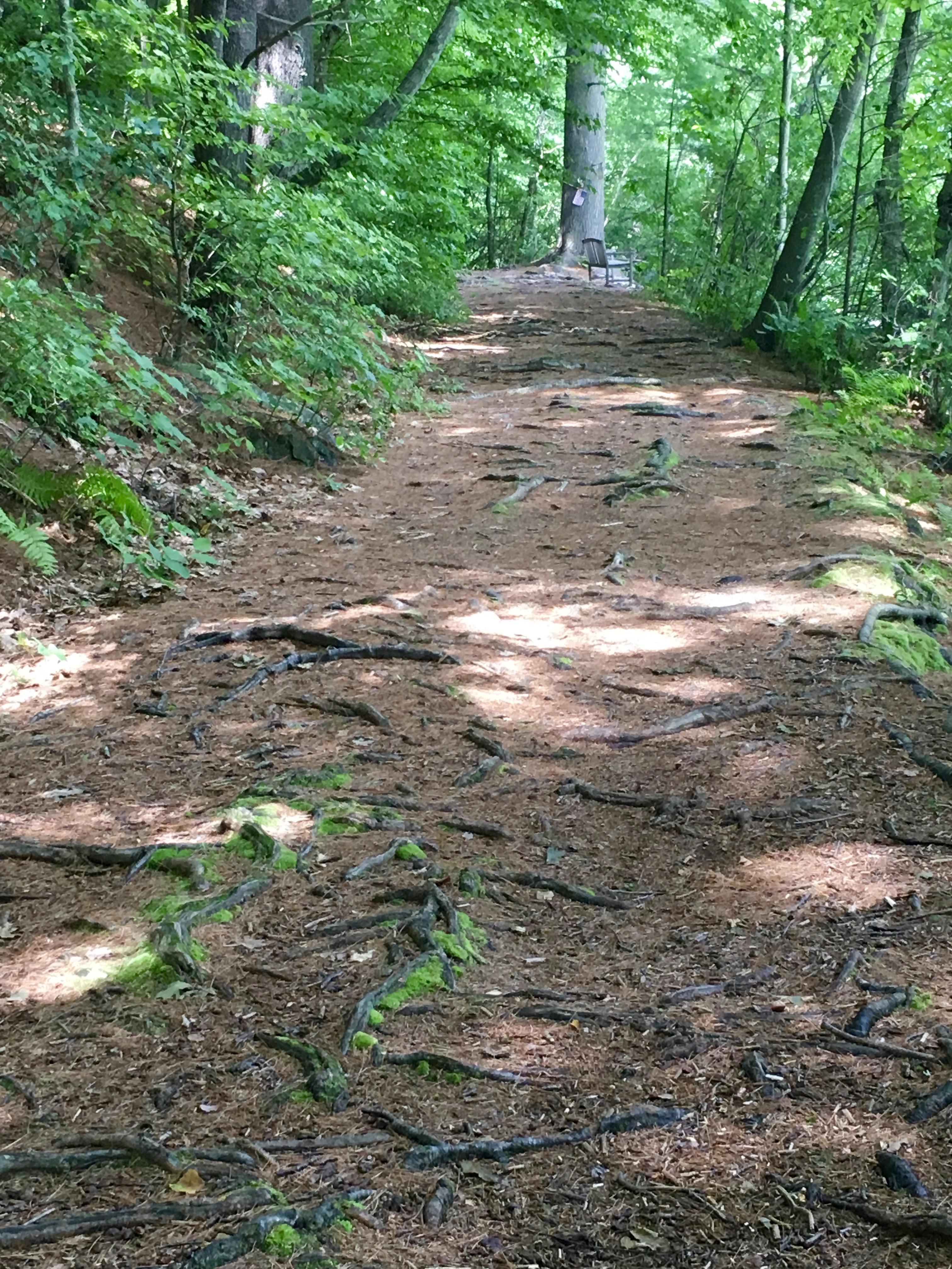 path at Lake Elise
