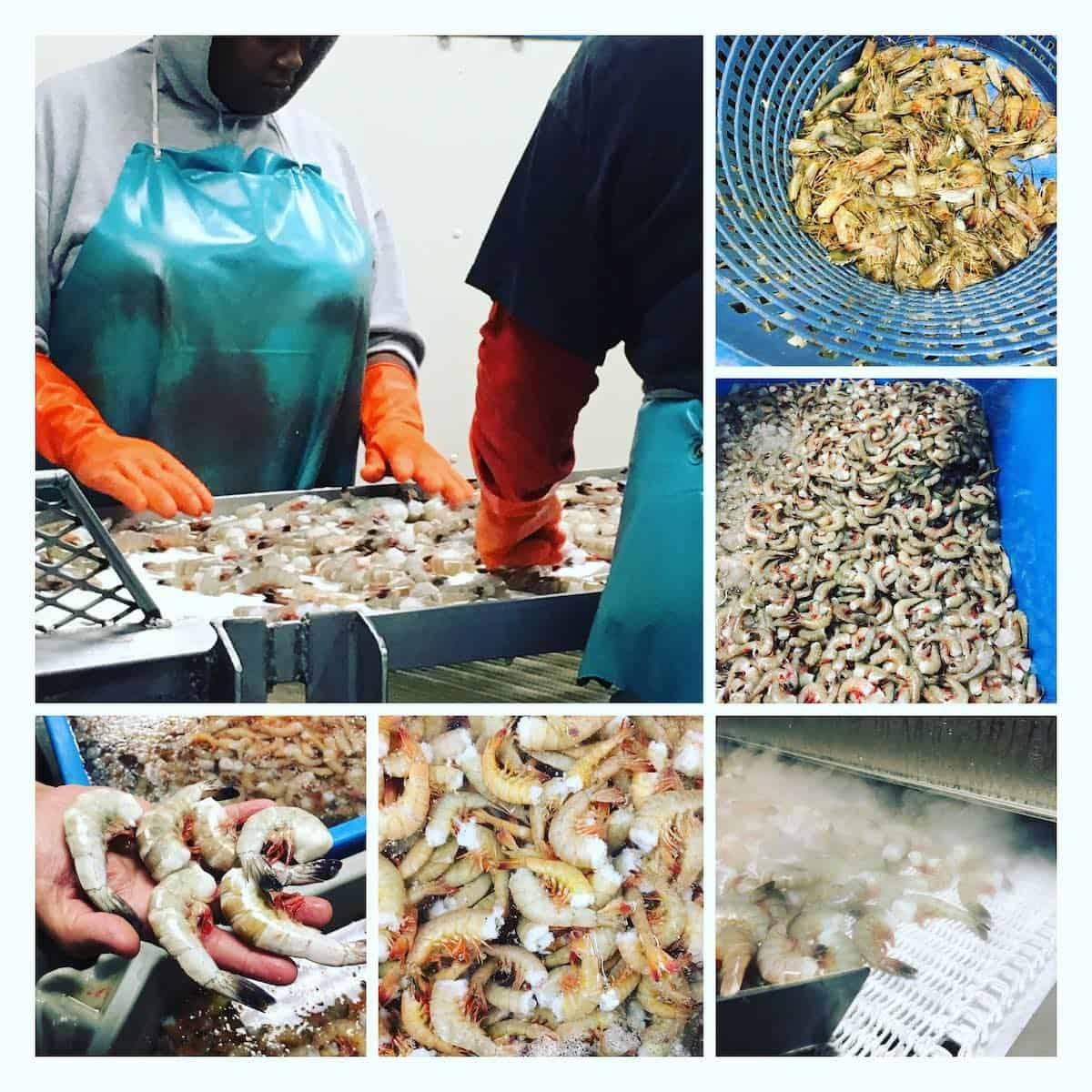 shrimp processing plant