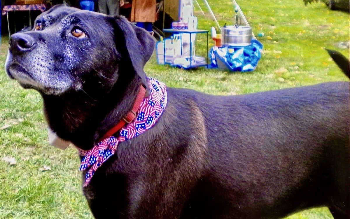 never a good time to say good-bye to our dog wearing a patriotic bandana