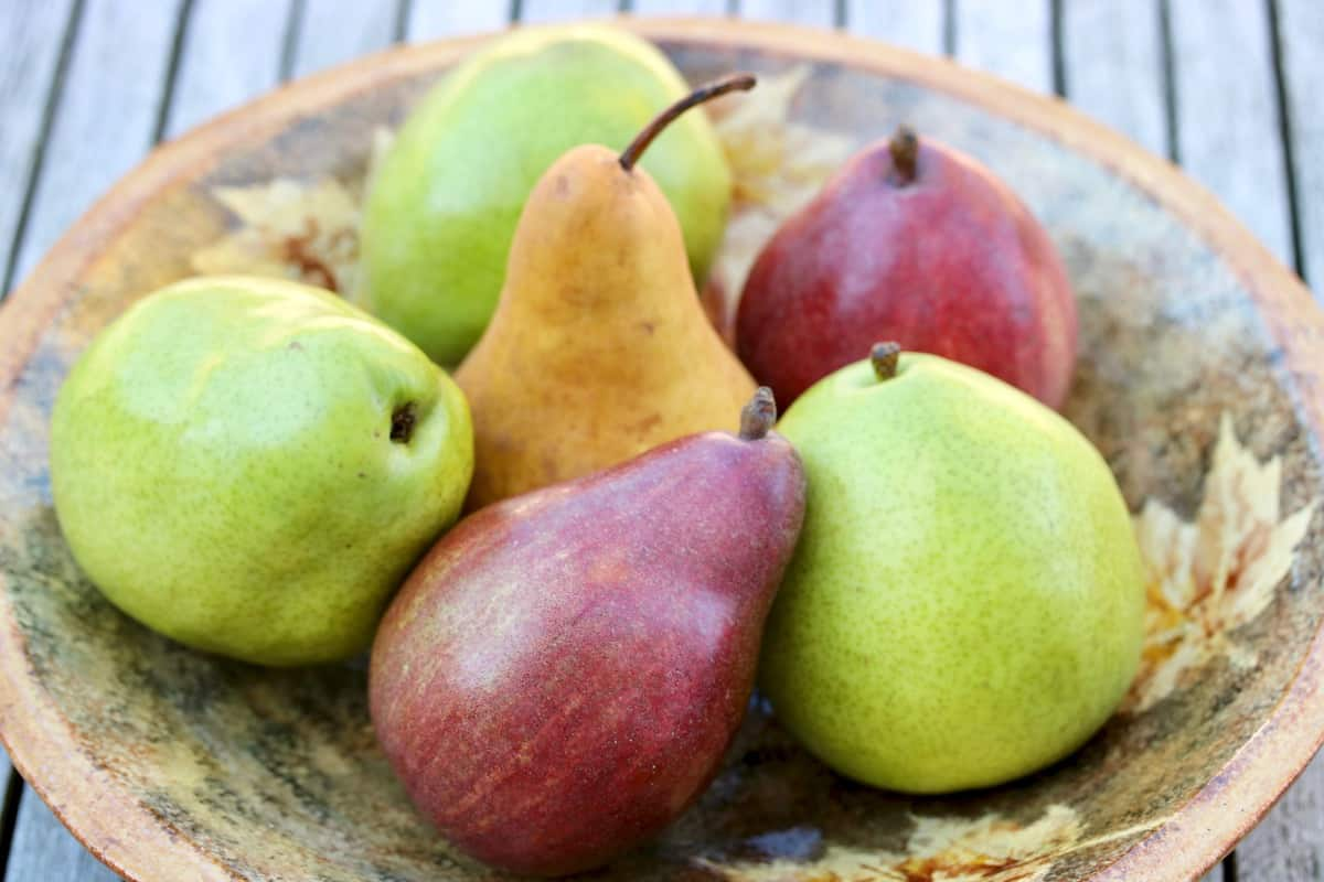bowl of colorful pears