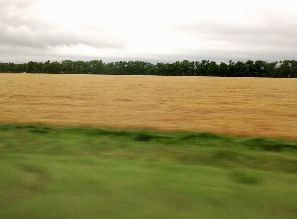 From Field to Fork a healthy wheat field